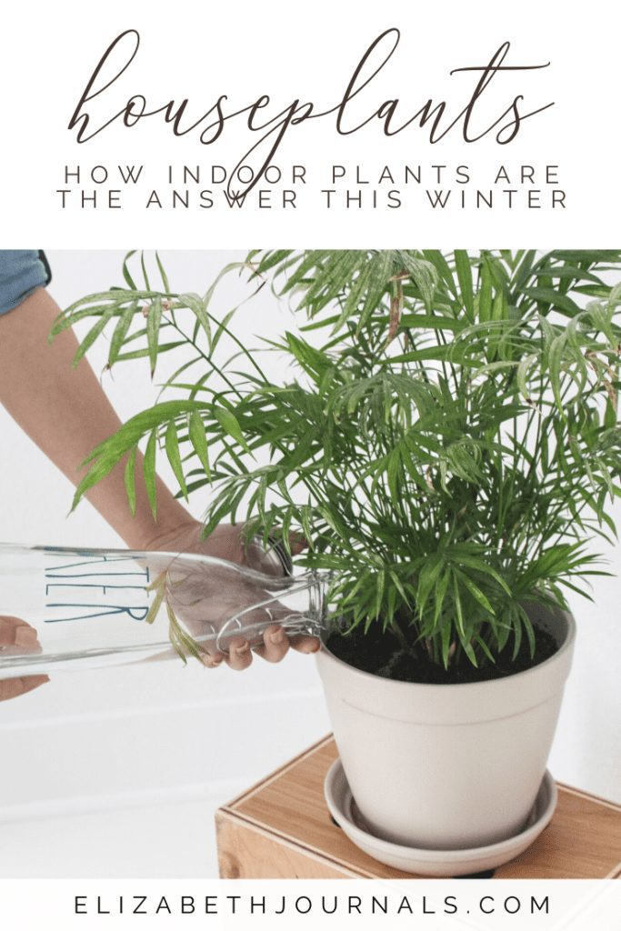 Over 10 million Americans have seasonal depression and adding plants in your home can help. Here are my favorite indoor plants for winter self-care!