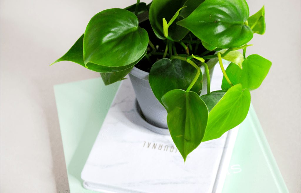 journal houseplant